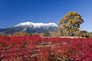 紅葉と御嶽山の写真素材 [FYI04671465]