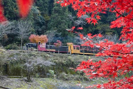 紅葉と保津峡トロッコ列車の写真素材 [FYI04671472]