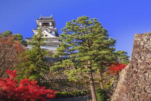 紅葉と高知城の写真素材 [FYI04671474]