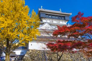 紅葉と小倉城の写真素材 [FYI04671476]