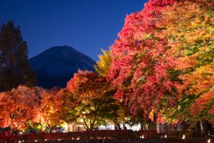 紅葉と富士山夜景の写真素材 [FYI04671485]