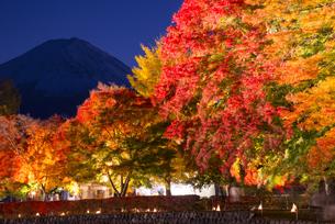 紅葉と富士山夜景の写真素材 [FYI04671487]