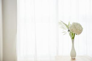 部屋に飾られているアジサイとヤシの写真素材 [FYI04671523]