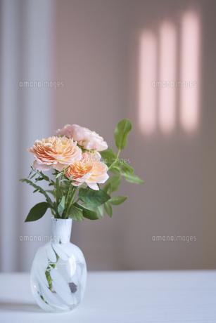 部屋に飾られたオレンジのバラの写真素材 [FYI04671533]