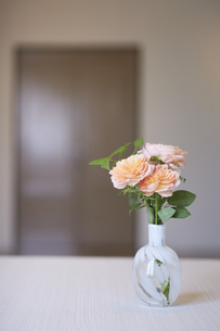 部屋に飾られたオレンジのバラの写真素材 [FYI04671534]