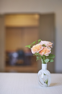 部屋に飾られたオレンジのバラの写真素材 [FYI04671535]