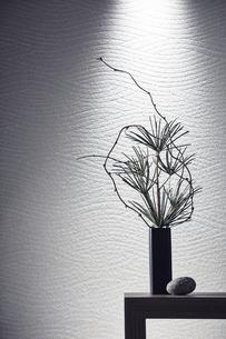 台の上の松と枝の写真素材 [FYI04671541]