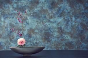 舟形の器に活けられた枝と花の写真素材 [FYI04671545]