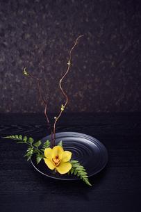 黒い皿に活けられた枝と葉っぱと黄色い花の写真素材 [FYI04671546]