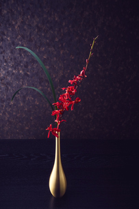 金色の一輪挿しに活けられた赤い花と細い葉っぱの写真素材 [FYI04671554]