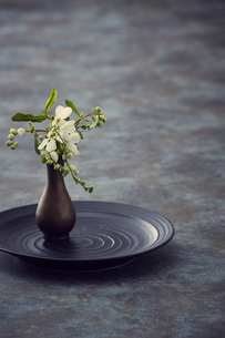 黒い皿の一輪挿しと白い花の写真素材 [FYI04671562]