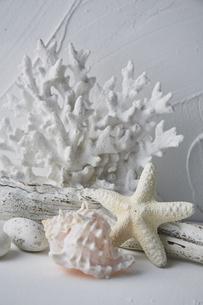白トーンでまとめた珊瑚と流木と貝とヒトデと小石の写真素材 [FYI04671595]