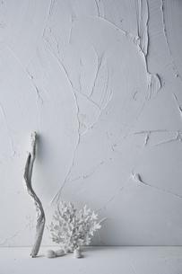 白トーンでまとめた流木と珊瑚の写真素材 [FYI04671596]