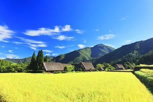世界文化遺産 秋の白川郷合掌造り集落の写真素材 [FYI04671631]