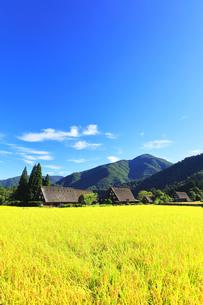 世界文化遺産 秋の白川郷合掌造り集落の写真素材 [FYI04671632]