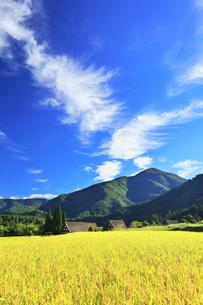 世界文化遺産 秋の白川郷合掌造り集落の写真素材 [FYI04671634]