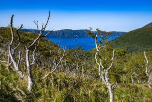 摩周湖の外輪山とダケカンバの木の写真素材 [FYI04671645]