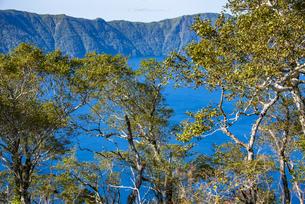 摩周湖の青色とダケカンバの木の写真素材 [FYI04671649]