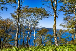 摩周湖と外輪山のダケカンバの木の写真素材 [FYI04671654]