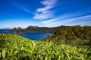 笹と摩周湖と摩周岳、雲の写真素材 [FYI04671655]