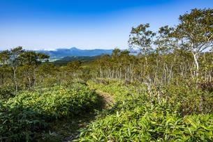 摩周岳の登山道から遠望する雌阿寒岳の写真素材 [FYI04671658]