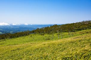 摩周岳の山麓の草原と林の写真素材 [FYI04671661]