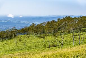 摩周岳の山麓の草原と林の写真素材 [FYI04671662]