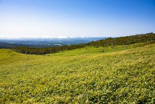 摩周岳の草原(阿寒摩周国立公園)の写真素材 [FYI04671663]