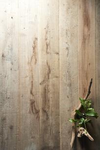 床に置いた植物と流木の写真素材 [FYI04671693]
