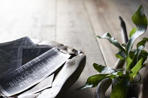 床に置いた植物と流木と木の器の写真素材 [FYI04671695]