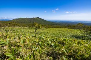 西別岳と笹原:摩周岳から望むの写真素材 [FYI04671730]