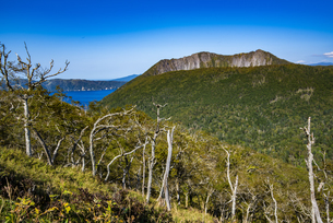 摩周岳とダケカンバの森の写真素材 [FYI04671732]