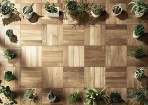 床のマス目に合わせ整列された複数の植物の写真素材 [FYI04671751]