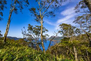 ダケカンバの林から望む摩周湖と摩周岳の写真素材 [FYI04671754]