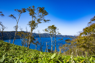 摩周湖と笹原とダケカンバの木の写真素材 [FYI04671756]