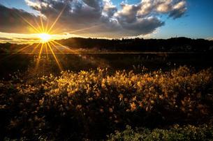 秋の夕日の写真素材 [FYI04672532]