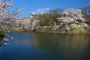 彦根城桜眺望の写真素材 [FYI04672543]