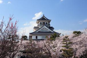 長浜城桜の写真素材 [FYI04672568]