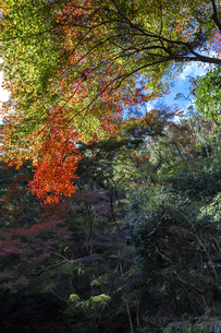 箕面山と紅葉の写真素材 [FYI04672572]