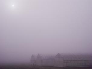 濃霧の朝の写真素材 [FYI04672592]