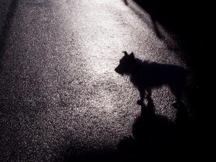 シルエットの犬の写真素材 [FYI04672597]