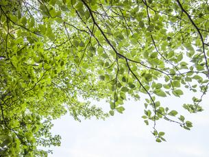 新緑の写真素材 [FYI04672656]