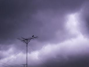 アナログアンテナに止まる鳩の写真素材 [FYI04672713]