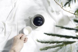 植物の影が差し込む窓辺と白い布とコーヒーカップのある写真素材の写真素材 [FYI04672965]