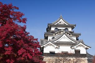 紅葉と彦根城の写真素材 [FYI04673090]