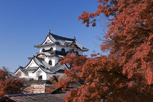 紅葉と彦根城の写真素材 [FYI04673091]