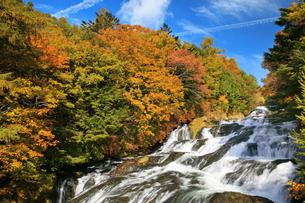 紅葉の竜頭の滝の写真素材 [FYI04673203]