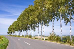 舗装道路と白樺の並木の写真素材 [FYI04673250]