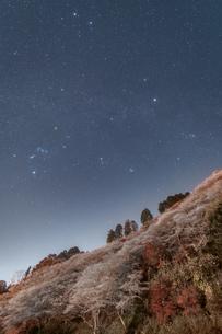 四季桜と冬の星たちの写真素材 [FYI04673450]