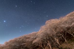 四季桜と冬のダイヤモンドの写真素材 [FYI04673452]